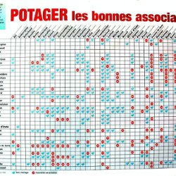 Association au potager plantes l gumes 20 32 pearltrees - Association de legumes au potager ...